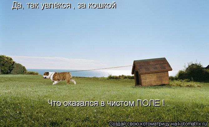 Котоматрица: Да, так увлёкся , за кошкой Что оказался в чистом ПОЛЕ !