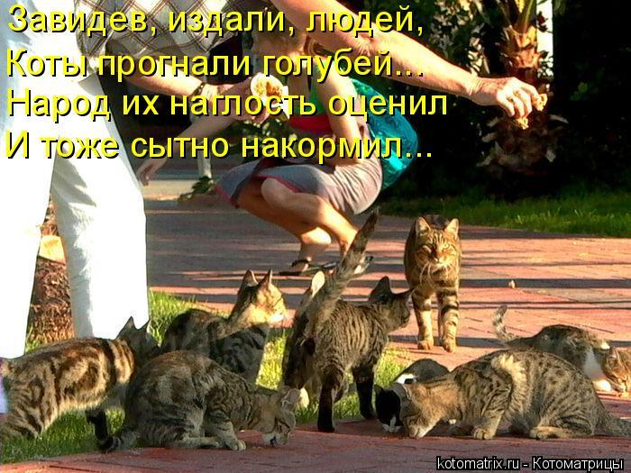 Котоматрица: Завидев, издали, людей, Коты прогнали голубей….. Народ их наглость оценил И тоже сытно накормил…..