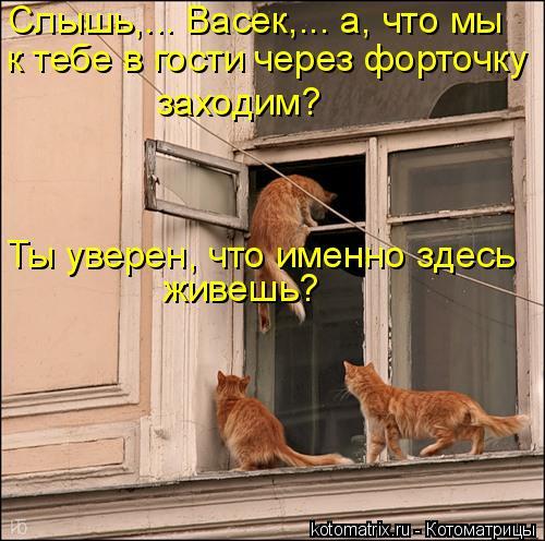 Котоматрица: Слышь,... Васек,... а, что мы  к тебе в гости через форточку  заходим?  Ты уверен, что именно здесь живешь?