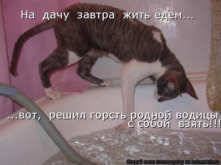 Котоматрица: На  дачу  завтра  жить едем... ...вот,  решил горсть родной водицы  с собой  взять!!!