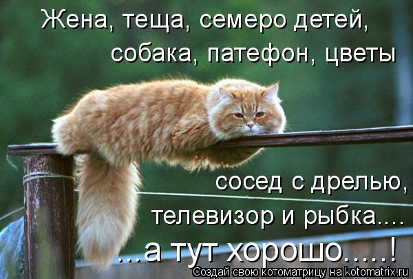 Котоматрица: собака, патефон, цветы сосед с дрелью, телевизор и рыбка.... Жена, теща, семеро детей, ...а тут хорошо.....!