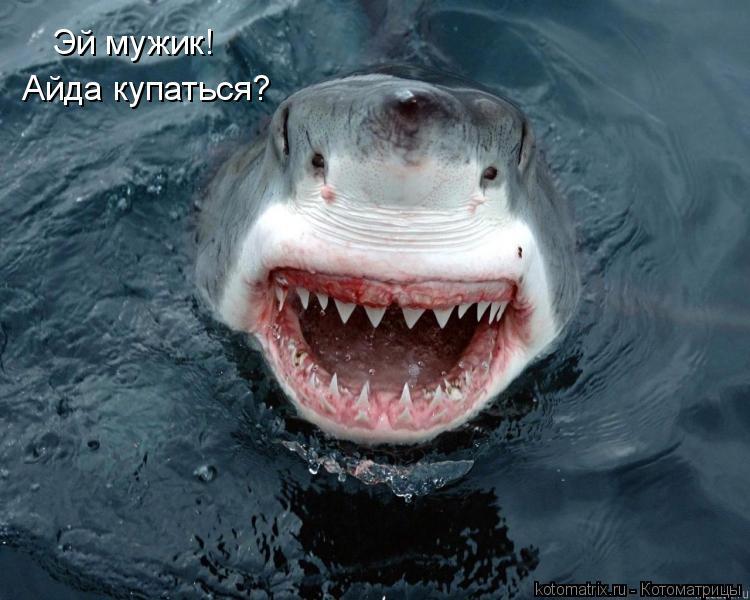 Котоматрица: Эй мужик!  Айда купаться?