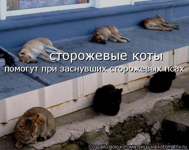 Котоматрица: сторожевые коты помогут при заснувших сторожевых псах