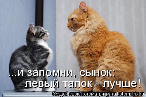 Котоматрица: ...и запомни, сынок: левый тапок - лучше!