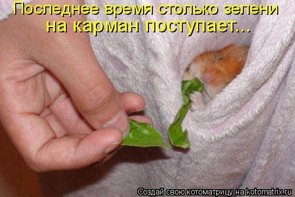 Котоматрица: Последнее время столько зелени  на карман поступает...
