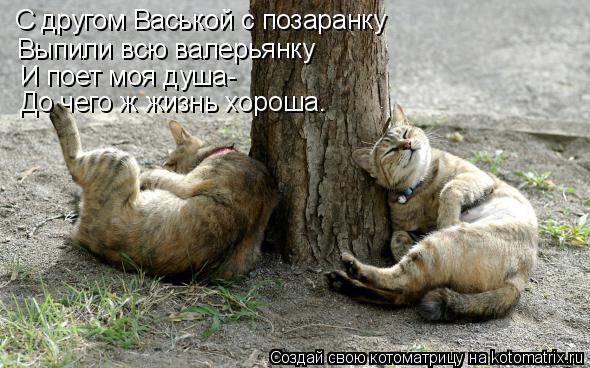 Котоматрица: С другом Васькой с позаранку Выпили всю валерьянку И поет моя душа- До чего ж жизнь хороша.
