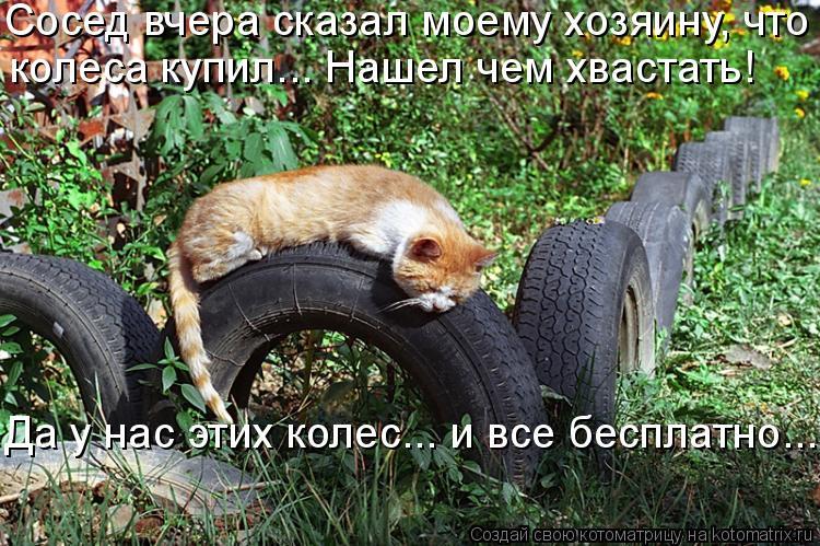 Котоматрица: Сосед вчера сказал моему хозяину, что  колеса купил... Нашел чем хвастать!  Да у нас этих колес….. и все бесплатно...