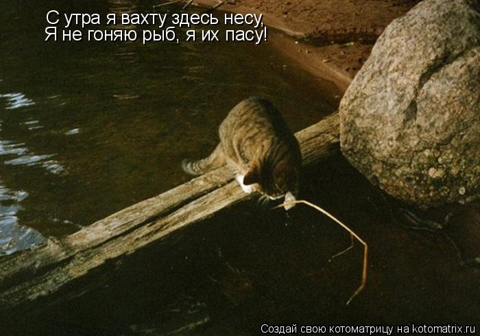 Котоматрица: С утра я вахту здесь несу, Я не гоняю рыб, я их пасу!
