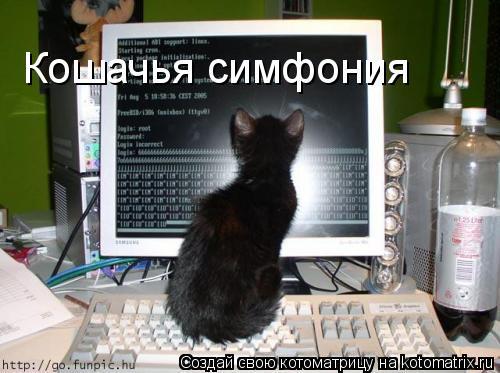 Котоматрица: Кошачья симфония