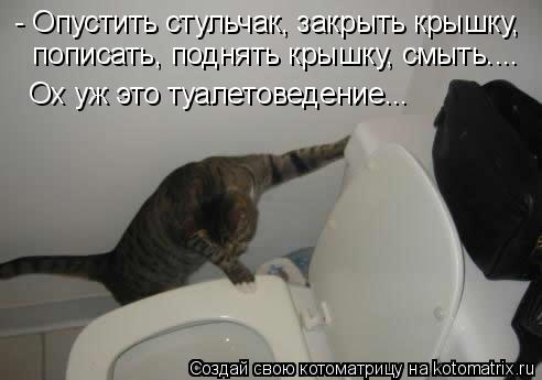 Котоматрица: - Опустить стульчак, закрыть крышку, пописать, поднять крышку, смыть....  Ох уж это туалетоведение...