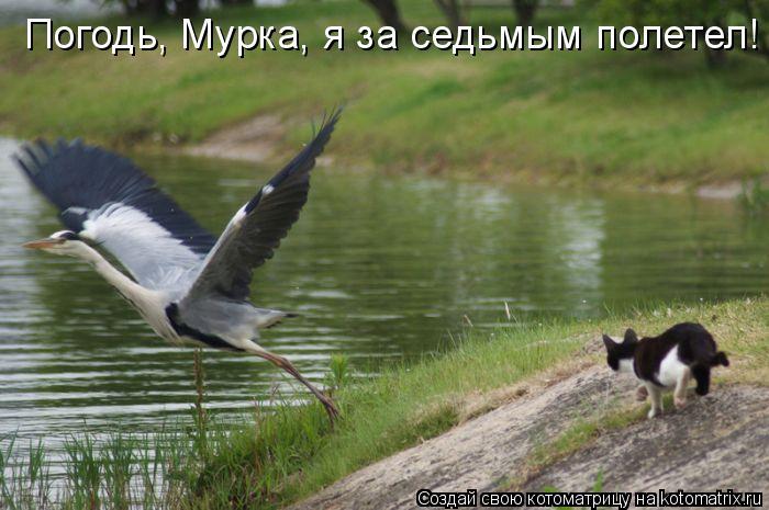 Котоматрица: Погодь, Мурка, я за седьмым полетел!