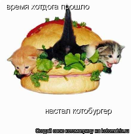 Котоматрица: время хотдога прошло настал котобургер