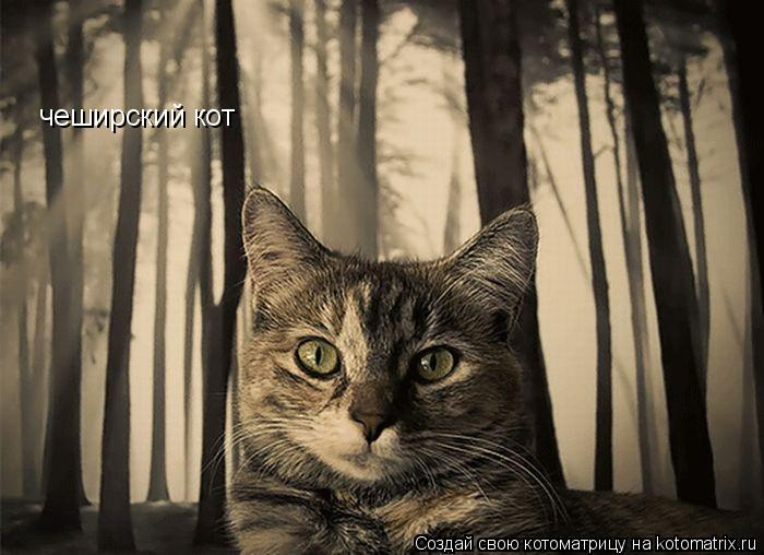 Котоматрица: чеширский кот