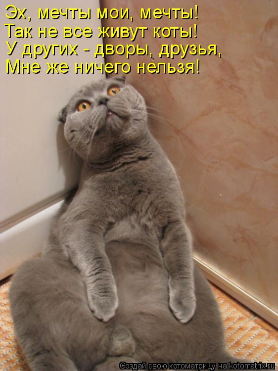 Котоматрица: Мне же ничего нельзя! Эх, мечты мои, мечты! У других - дворы, друзья, Так не все живут коты!