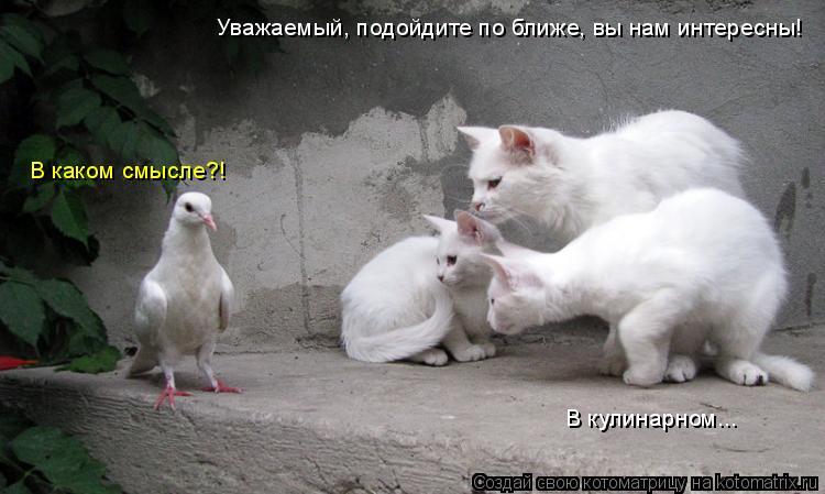 Котоматрица: Уважаемый, подойдите по ближе, вы нам интересны! В каком смысле?! В кулинарном...