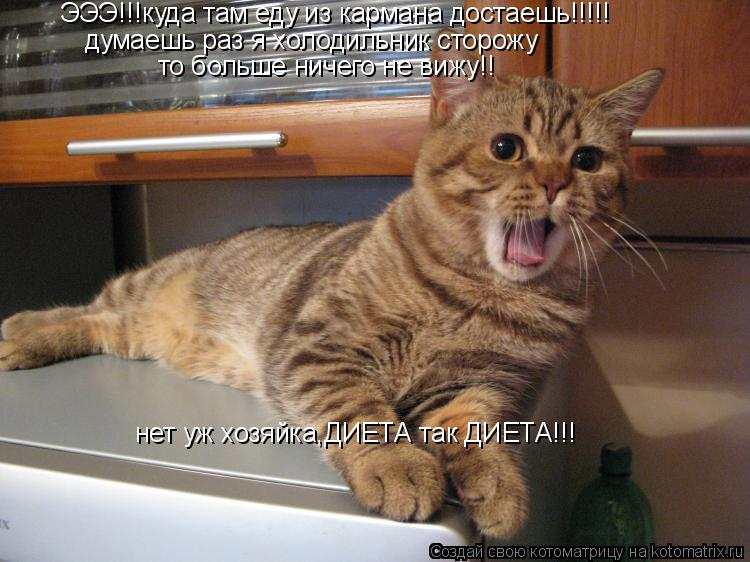 Котоматрица: ЭЭЭ!!!куда там еду из кармана достаешь!!!!! думаешь раз я холодильник сторожу  то больше ничего не вижу!! нет уж хозяйка,ДИЕТА так ДИЕТА!!!