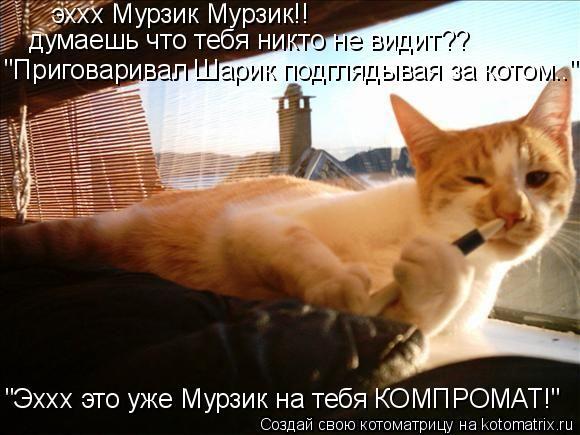 """Котоматрица: эххх Мурзик Мурзик!! думаешь что тебя никто не видит?? """"Приговаривал Шарик подглядывая за котом.."""" """"Эххх это уже Мурзик на тебя КОМПРОМАТ!"""""""