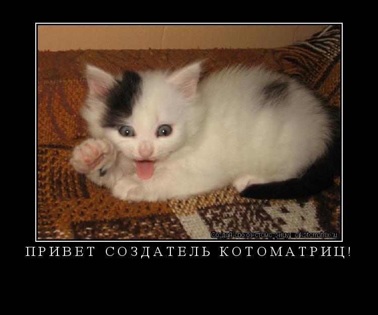 Котоматрица: привет создатель котоматриц!