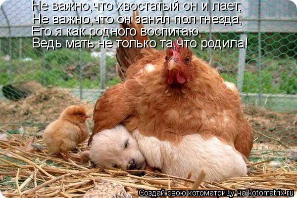 Котоматрица: Не важно,что хвостатый он и лает, Не важно,что он занял пол гнезда, Его я как родного воспитаю, Ведь мать не только та,что родила!