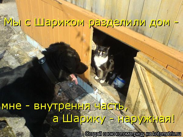 Котоматрица: Мы с Шариком разделили дом - мне - внутрення часть,  а Шарику - наружная!