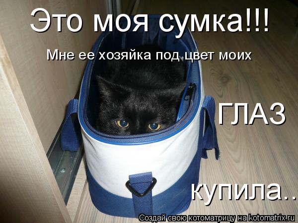 Котоматрица: Это моя сумка!!! Мне ее хозяйка под цвет моих ГЛАЗ купила...