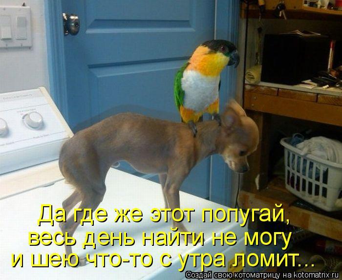 Котоматрица: Да где же этот попугай,  весь день найти не могу  и шею что-то с утра ломит...