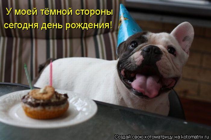 Котоматрица: У моей тёмной стороны  сегодня день рождения!