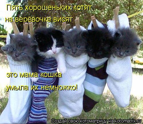 Котоматрица: Пять хорошеньких котят на верёвочке висят это мама кошка умыла их немножко!