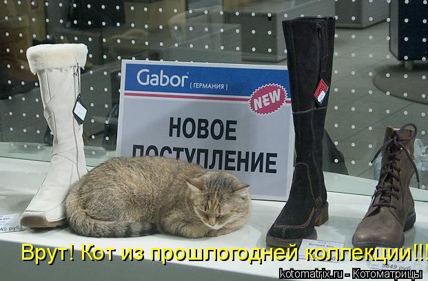 Котоматрица: Врут! Кот из прошлогодней коллекции!!!