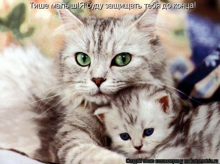 Котоматрица: Тише малыш!Я буду защищать тебя до конца!