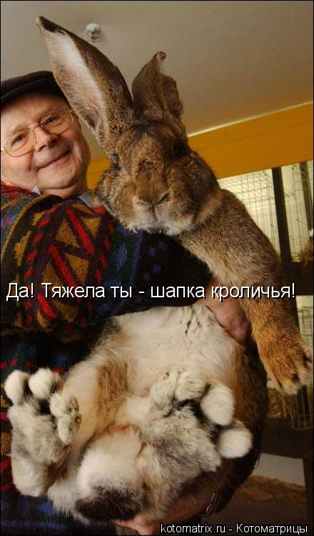 Котоматрица: Да! Тяжела ты - шапка кроличья!
