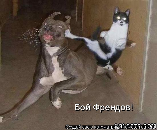 Котоматрица: Бой Френдов!