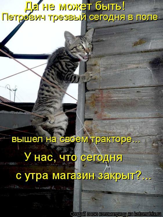 Котоматрица: Да не может быть!  Петрович трезвый сегодня в поле   с утра магазин закрыт?...  У нас, что сегодня  вышел на своем тракторе…..