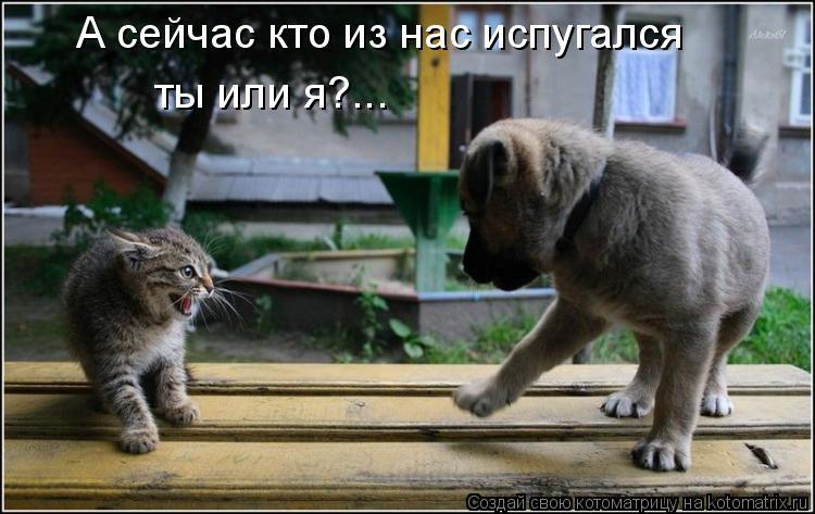 Котоматрица: А сейчас кто из нас испугался ты или я?...