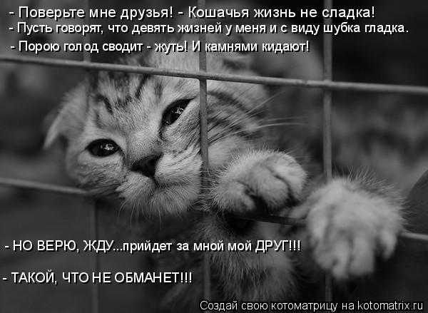 Котоматрица: - Поверьте мне друзья! - Кошачья жизнь не сладка! - Пусть говорят, что девять жизней у меня и с виду шубка гладка. - Порою голод сводит - жуть! И к