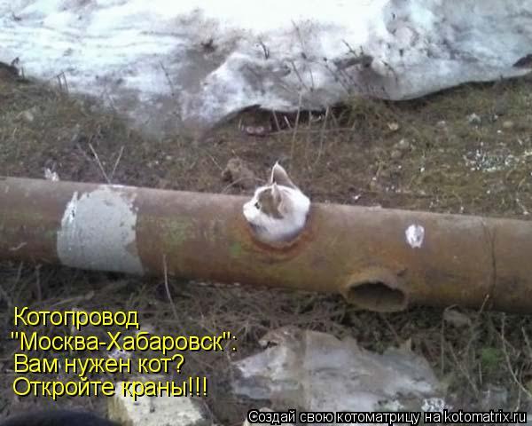 """Котоматрица: Котопровод  """"Москва-Хабаровск"""": Вам нужен кот? Откройте краны!!!"""