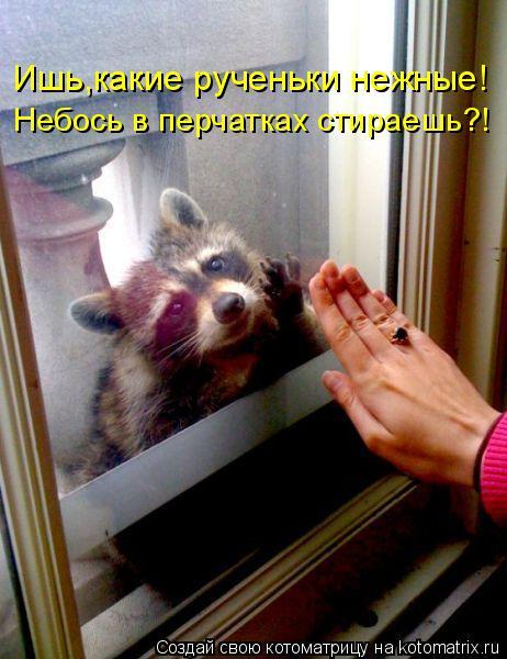 Котоматрица: Ишь,какие рученьки нежные! Небось в перчатках стираешь?!