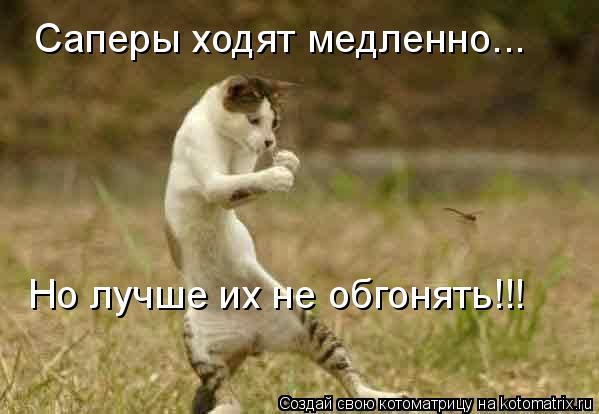 Котоматрица: Саперы ходят медленно... Но лучше их не обгонять!!!