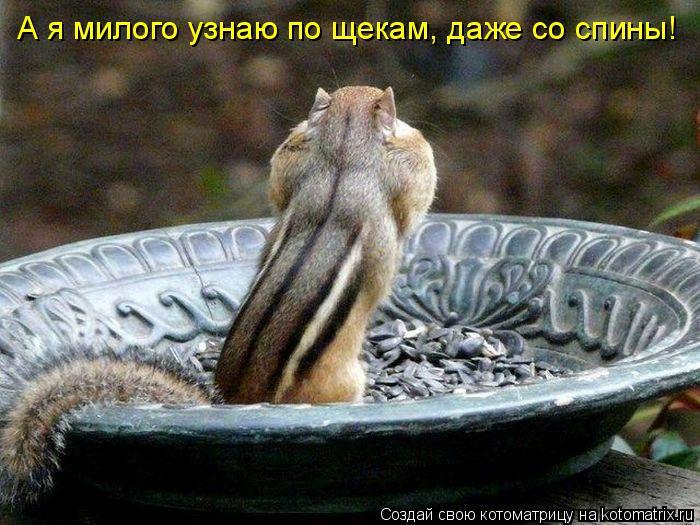 Котоматрица: А я милого узнаю по щекам, даже со спины!