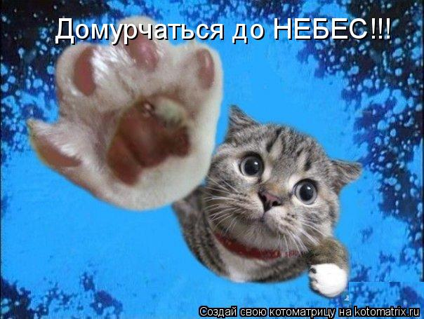 Котоматрица: Домурчаться до НЕБЕС!!!