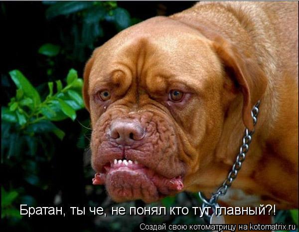 Котоматрица: Братан, ты че, не понял кто тут главный Братан, ты че, не понял кто тут главный?!