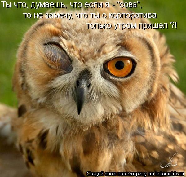 """Котоматрица: только утром пришел ?! то не замечу, что ты с корпоратива  Ты что, думаешь, что если я - """"сова"""","""