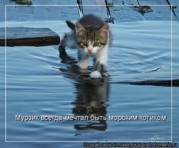 Котоматрица: Мурзик всегда мечтал быть морским котиком