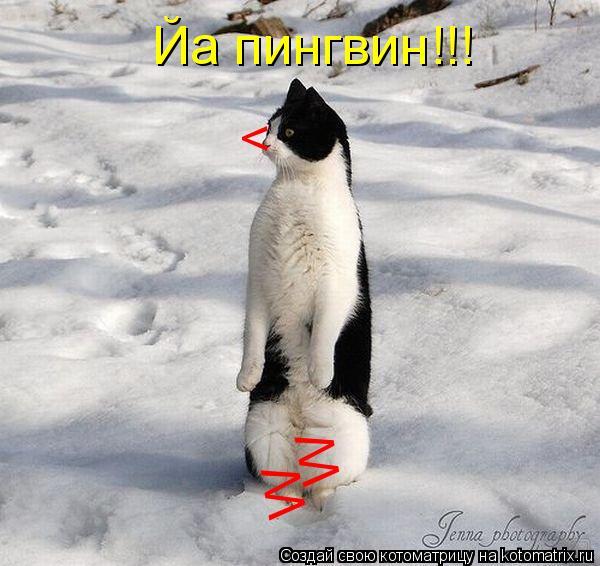 Котоматрица: <  Йа пингвин!!! W W