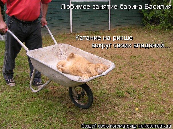 Котоматрица: Любимое занятие барина Василия Катание на рикше вокруг своих владений...