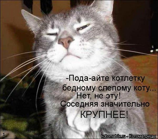 Котоматрица: -Пода-айте котлетку бедному слепому коту... Нет, не эту! Соседняя значительно КРУПНЕЕ!