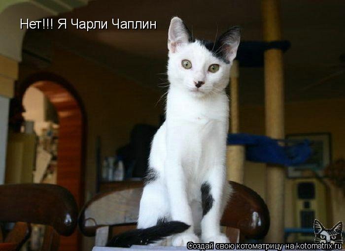 Котоматрица: Нет!!! Я Чарли Чаплин