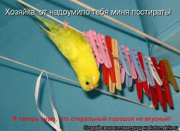 Котоматрица: Хозяйка, от надоумило тебя миня постирать! Я теперь знаю, что стиральный порошок не вкусный!