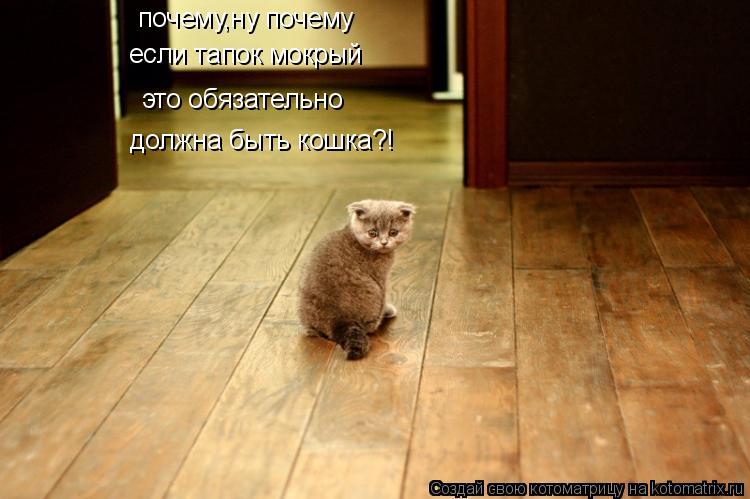 Котоматрица: почему,ну почему если тапок мокрый это обязательно должна быть кошка?!