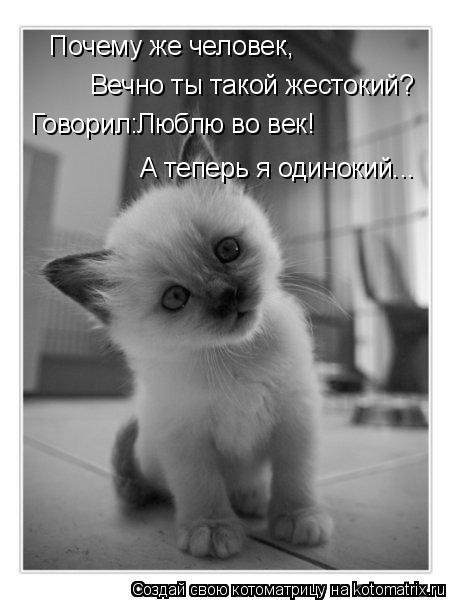 Котоматрица: Почему же человек, Вечно ты такой жестокий? Говорил:Люблю во век! А теперь я одинокий...